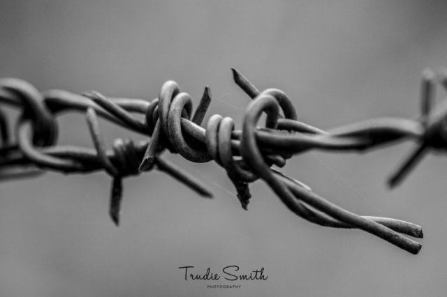 Barbed by Trudie Smith