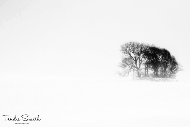 Copse in the Snow by Trudie Smith