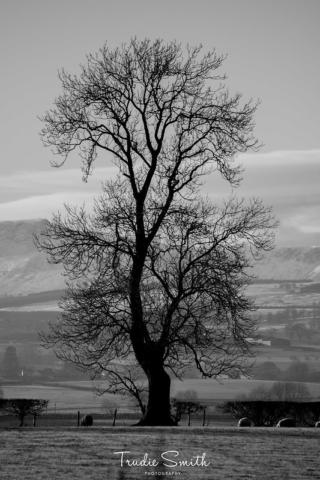 Frosty Day by Trudie Smith