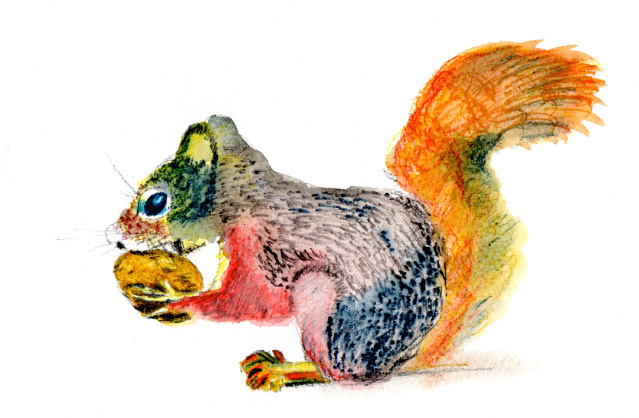 Squirrel by Susan Gate