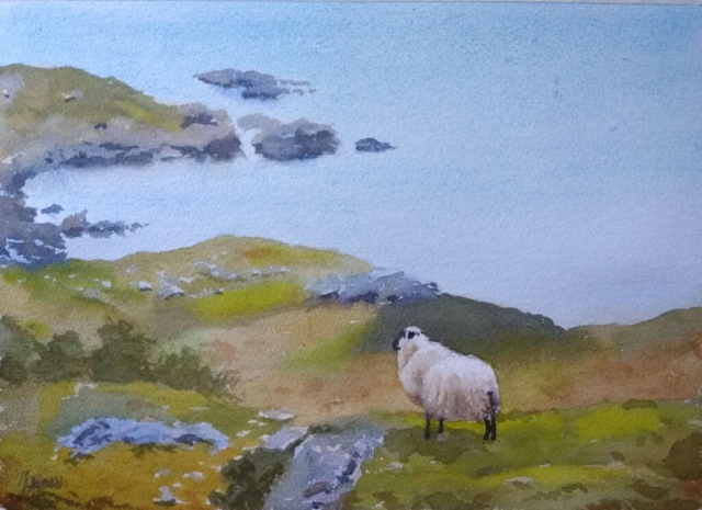Beara Sheep