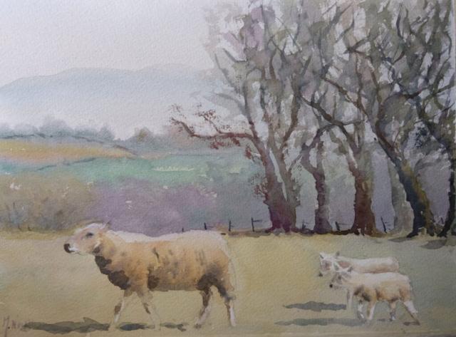 Eden Valley Sheep