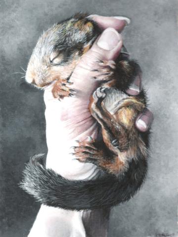 Squirrel-Kitten, Acrylic