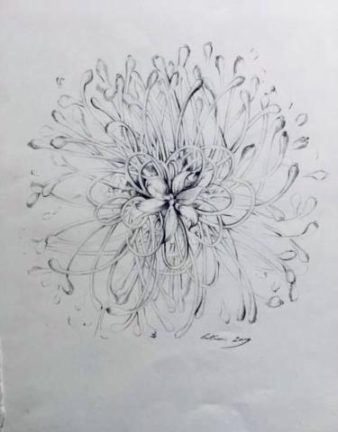 Flower study - Pencil
