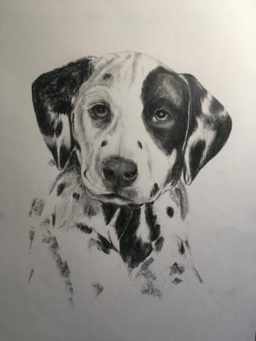 Dalmatian puppy - pencil