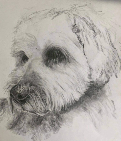 Ted the dog - pencil study